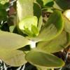 sunny succulent
